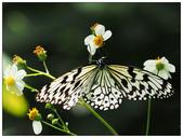 蝴蝶100:AC030199.jpg