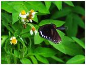 蝴蝶100:P8050189_1.jpg
