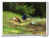 自然野趣:P3310159_title.jpg