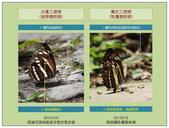 蝴蝶100:20181213台灣三線寬紋三線腹面對照圖.jpg