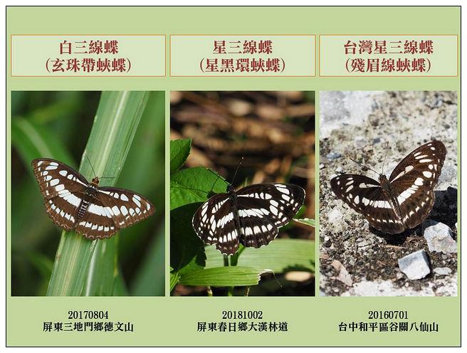 蝴蝶100:20181029白三線星三線台灣星三線.jpg