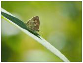 蝴蝶100:A2160093_1.jpg