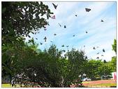蝴蝶100:P5260163_1.jpg