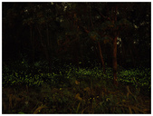 自然野趣:P4190013.jpg