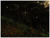 自然野趣:P4190015.jpg