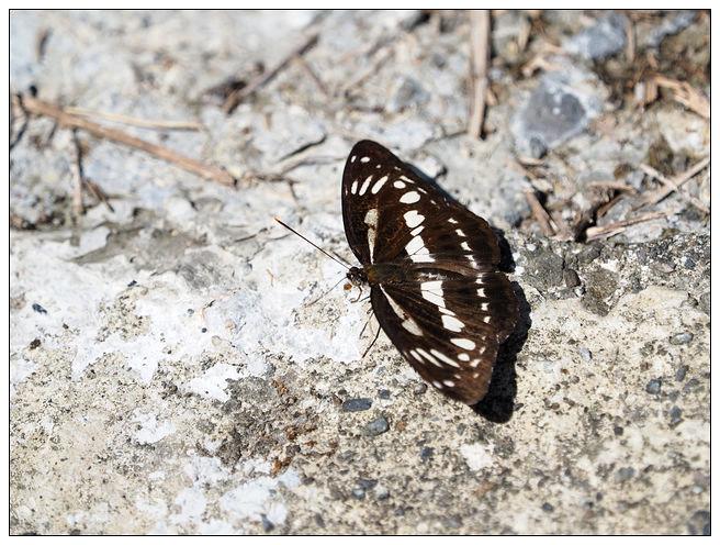 蝴蝶100:A7010147_橫.jpg