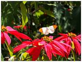 蝴蝶100:PC010109.jpg