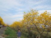 嘉義親水公園黃金風鈴木:IMG_6660.JPG