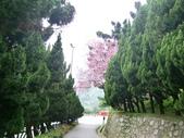 2011陽明山:CIMG4207.JPG