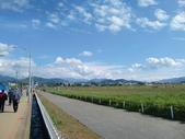 新社花海:CIMG4333.JPG