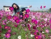2013年雲林刺桐孩沙里花海:CIMG6559-1024.jpg