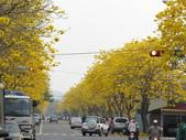 嘉義親水公園黃金風鈴木:IMG_7162.JPG