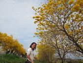 嘉義親水公園黃金風鈴木:IMG_6664.JPG