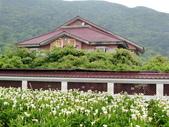 2011陽明山:CIMG4239.JPG