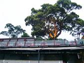 2011陽明山:CIMG4315.JPG