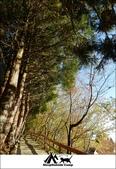 2014露營,新竹五峰野馬農園:16.jpg