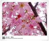 2012旅行視界,奮起湖星空小屋:2012奮起湖-20.jpg