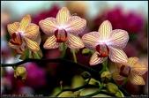 溪海花卉:DSC_0378_1