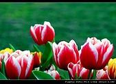 2009春節趴趴照:DSCF51561.jpg