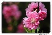 貓空杏花林:DSCF1078.jpg