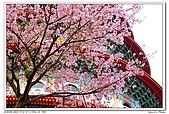 春櫻滿開天元宮:a01