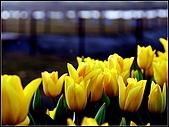 2009春節趴趴照:DSCF51551.jpg