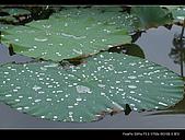 2008新屋蓮園:DSCF2961.jpg