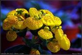 溪海花卉:DSC_0381