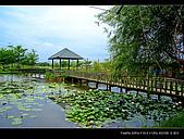 2008新屋蓮園:DSCF2937.jpg