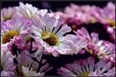 溪海花卉:DSC_0394