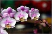溪海花卉:DSC_0396
