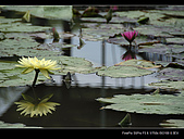 2008新屋蓮園:DSCF2942.jpg