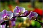 溪海花卉:DSC_0398