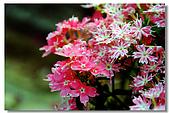 新社古堡花園:DSCF2348.jpg