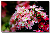 新社古堡花園:DSCF2349.jpg