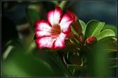 溪海花卉:DSC_0361