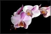 溪海花卉:DSC_0365