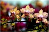 溪海花卉:DSC_0377