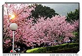 春櫻滿開天元宮:sunrise.jpg