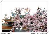 春櫻滿開天元宮:DSC_4292