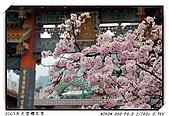 春櫻滿開天元宮:DSC_4101