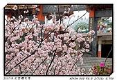 春櫻滿開天元宮:DSC_4102