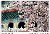 春櫻滿開天元宮:DSC_4126