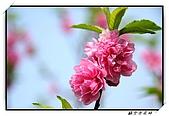 貓空杏花林:DSCF1053.jpg