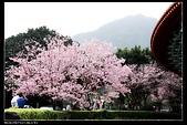 春櫻滿開天元宮:DSC_4328_1