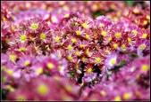 溪海花卉:DSC_0390