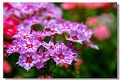 新社古堡花園:DSCF2350.jpg