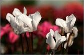 溪海花卉:DSC_0385