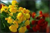 溪海花卉:DSC_0393