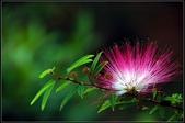 溪海花卉:DSC_0292